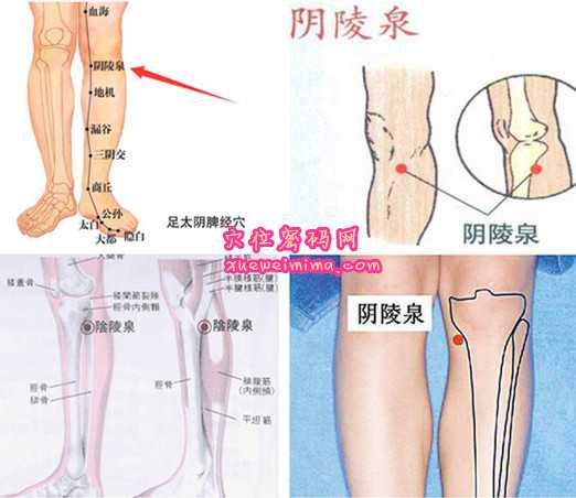 【 图解阴陵泉穴的位置】     【阴陵泉穴的位置】位于人体的小腿