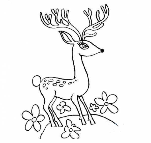 下面我们一起来欣赏一下梅花鹿的简笔画图片吧.