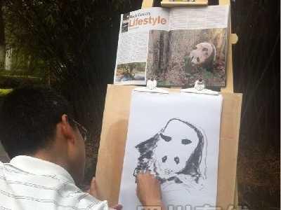 终身认养大熊猫 成都熊猫基地一只1岁大熊猫被终生认养