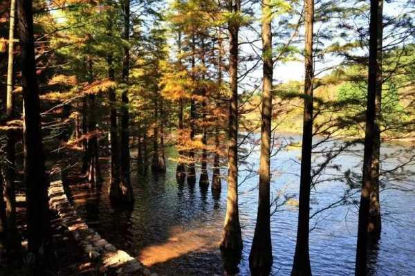优点:四明山国家森林公园森林公园位于四明山腹地,低山丘陵,山峰