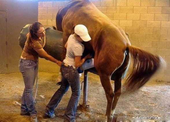 马的人工配种视频_母马交配 母马的生殖器兴奋视频 人和母马是最舒服的